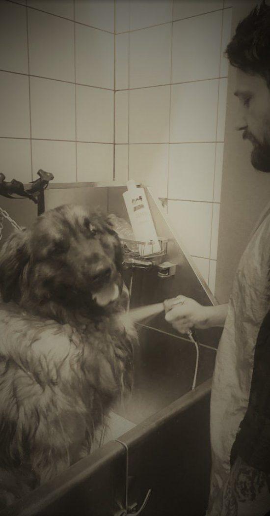 bagno-cane